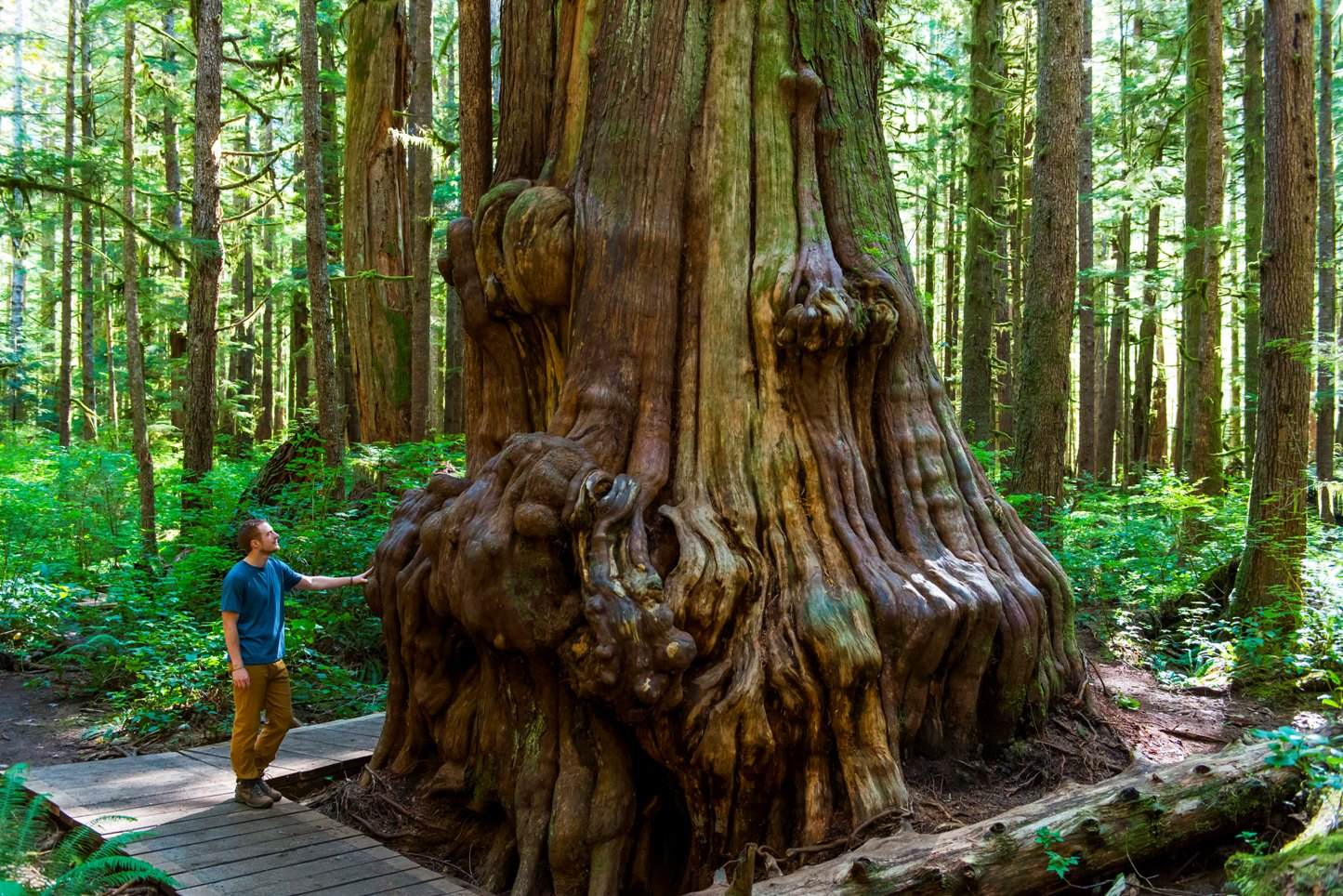 Vancouver Island bei Spiegel Online