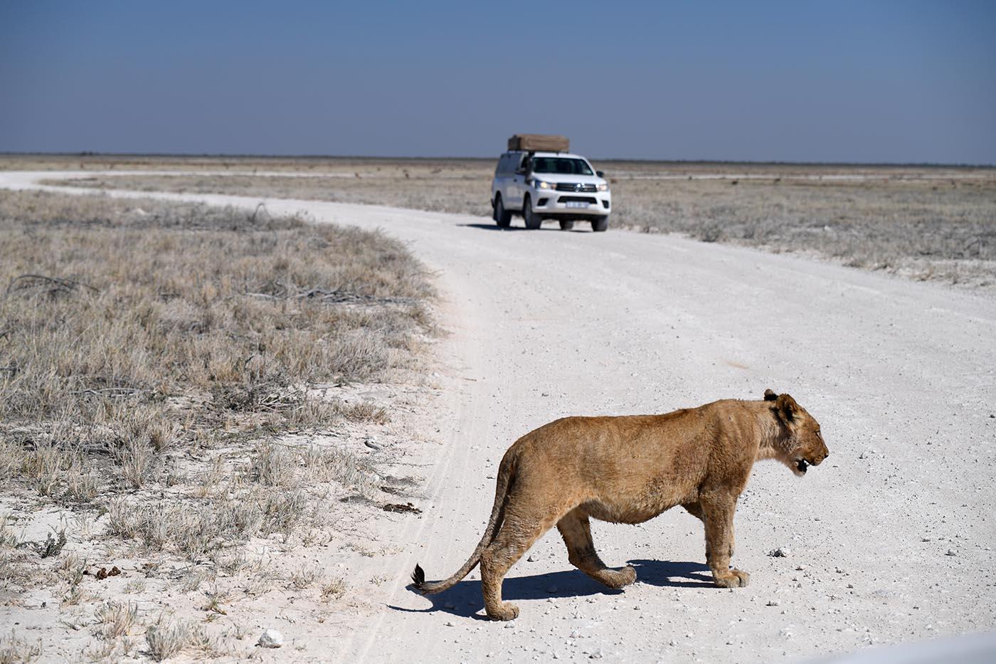 Recherche in Namibia