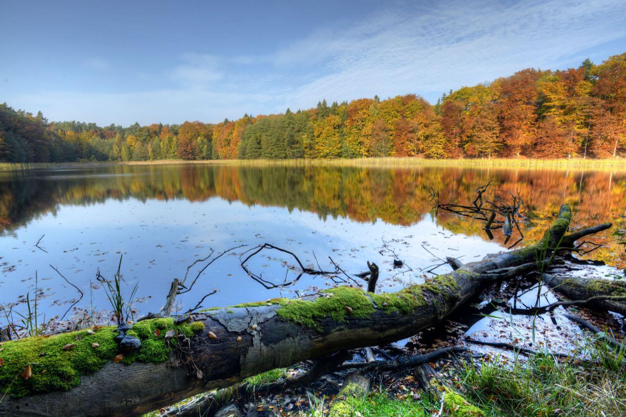 Spiegel Online: Naturerbe Grumsin