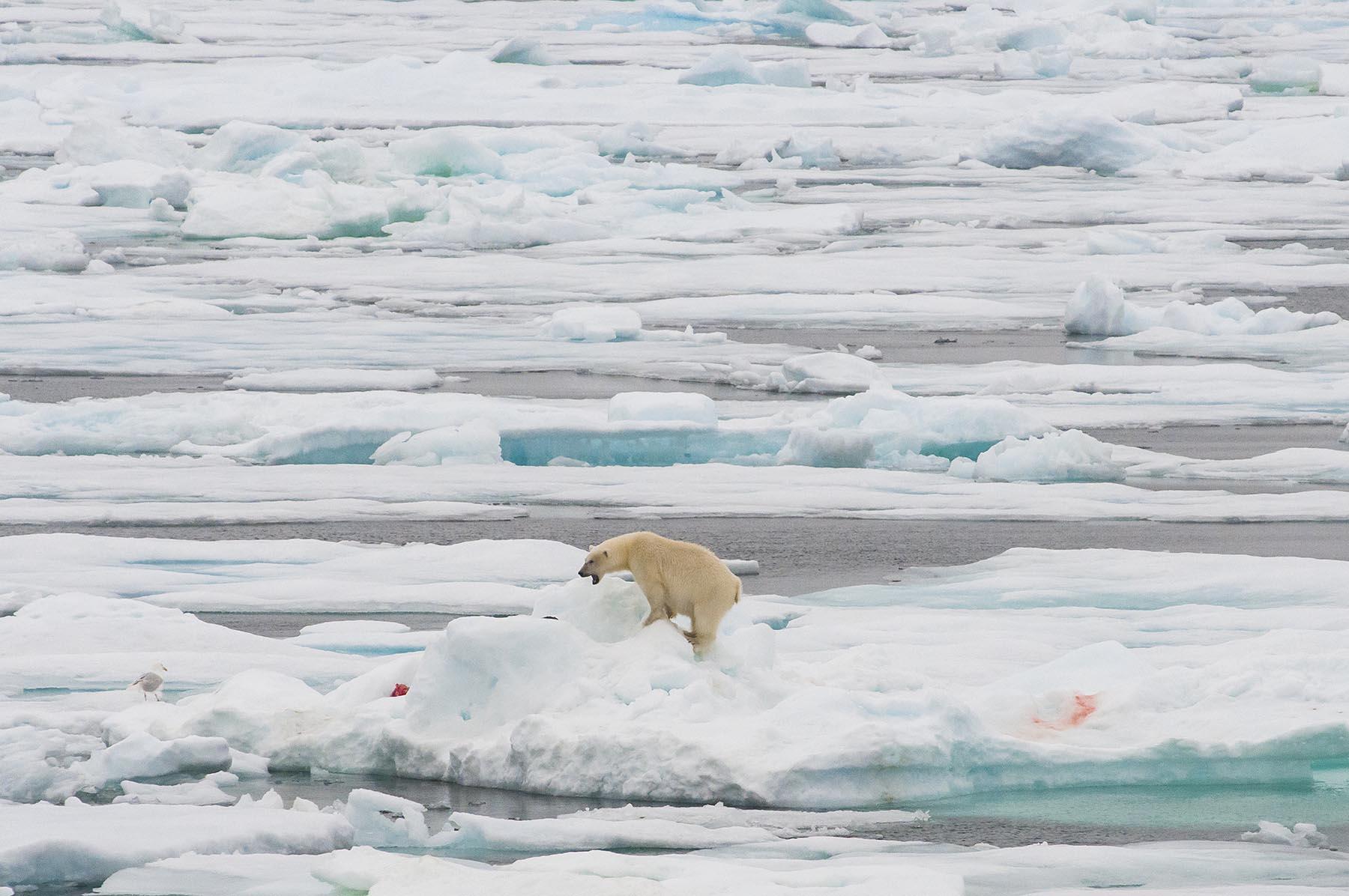 Kolumne über die Arktis