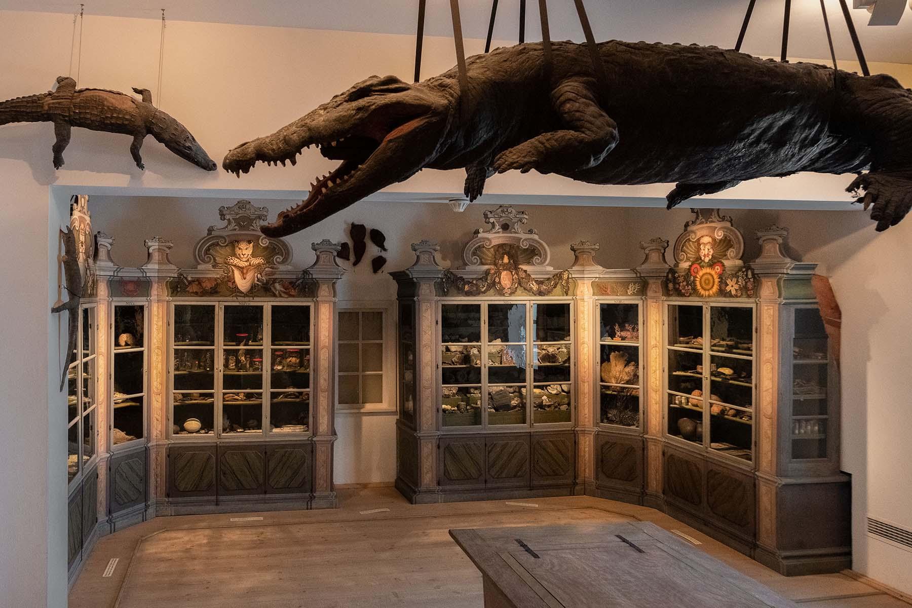 Wunderkammer in Halle im Foto von Thomas Meinicke