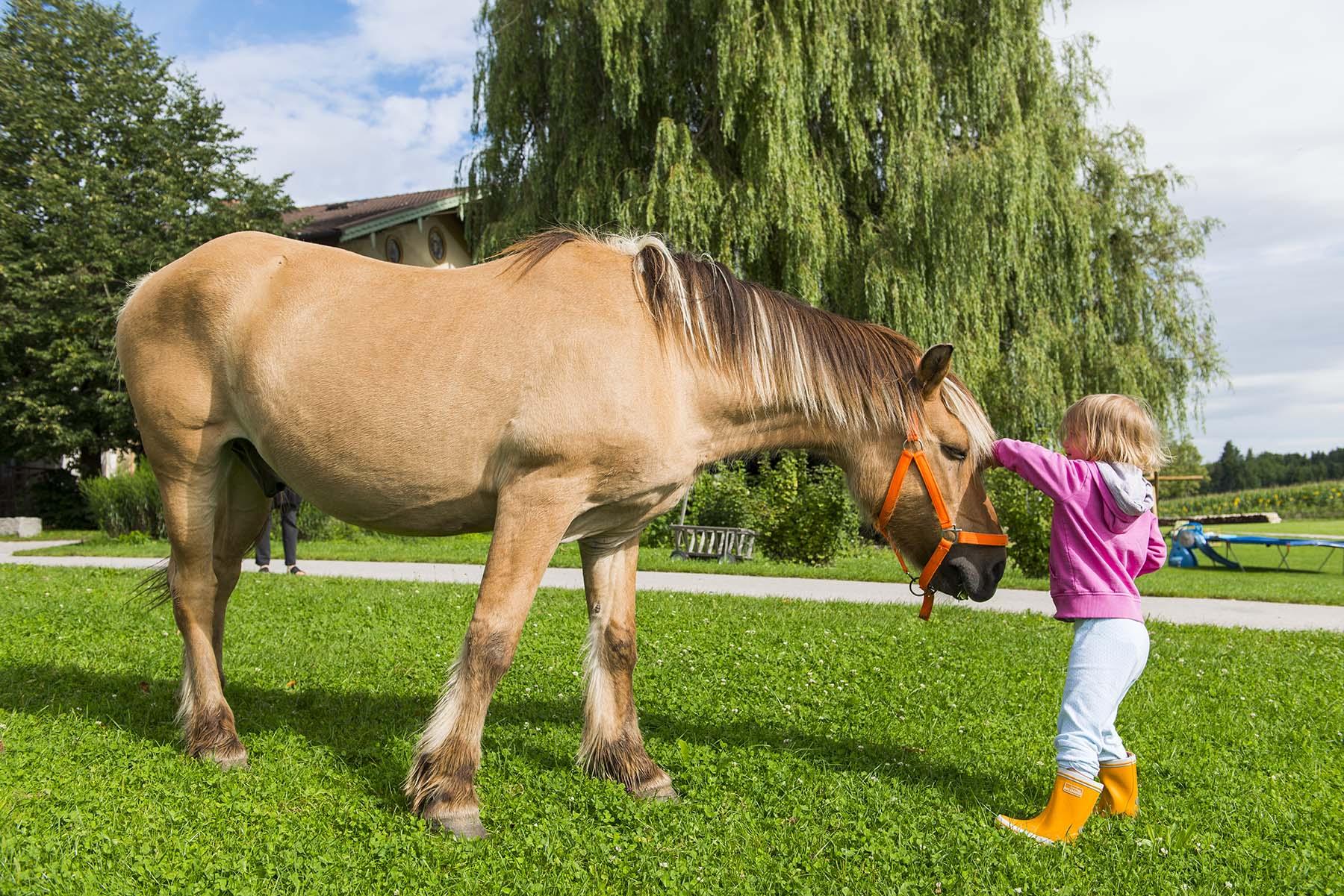 Foto eines Mädchens, das ein Pferd streichelt.